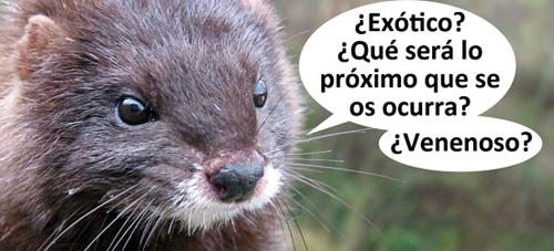 Visón exotique_r
