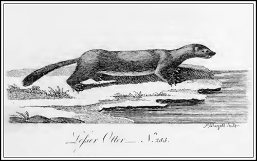 History of quadrupeds