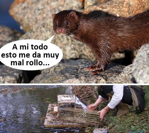 LIFE Lutreola Spain